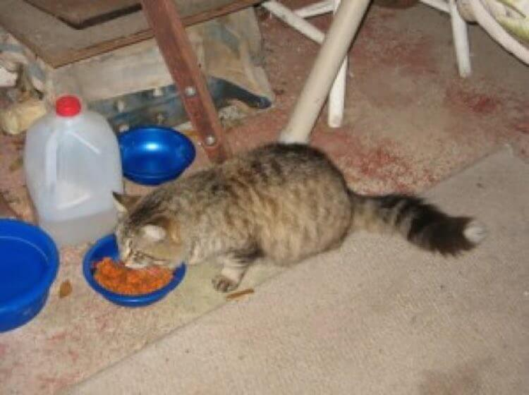 cat-breaks-out-of-shelter-to-return-to-his-rescuer-2
